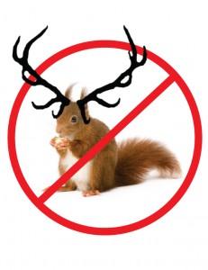 Squirrel Antler